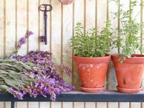 Best Plants for Vinyl Decks and Patios