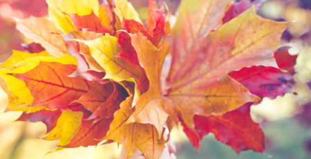 HAND HOLDING BOUQUET OF MAPLE LEAFS IN FALL COLOURS - TUFDEK