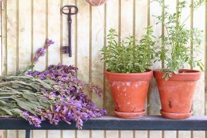 plant recommendations to grow on vinyl decks and patios