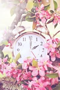 countdown spring viny ldeck
