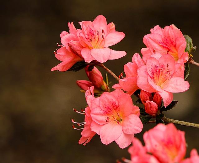 Image of Pink Azaleas - vinyl deck colour of the year - Tufdek